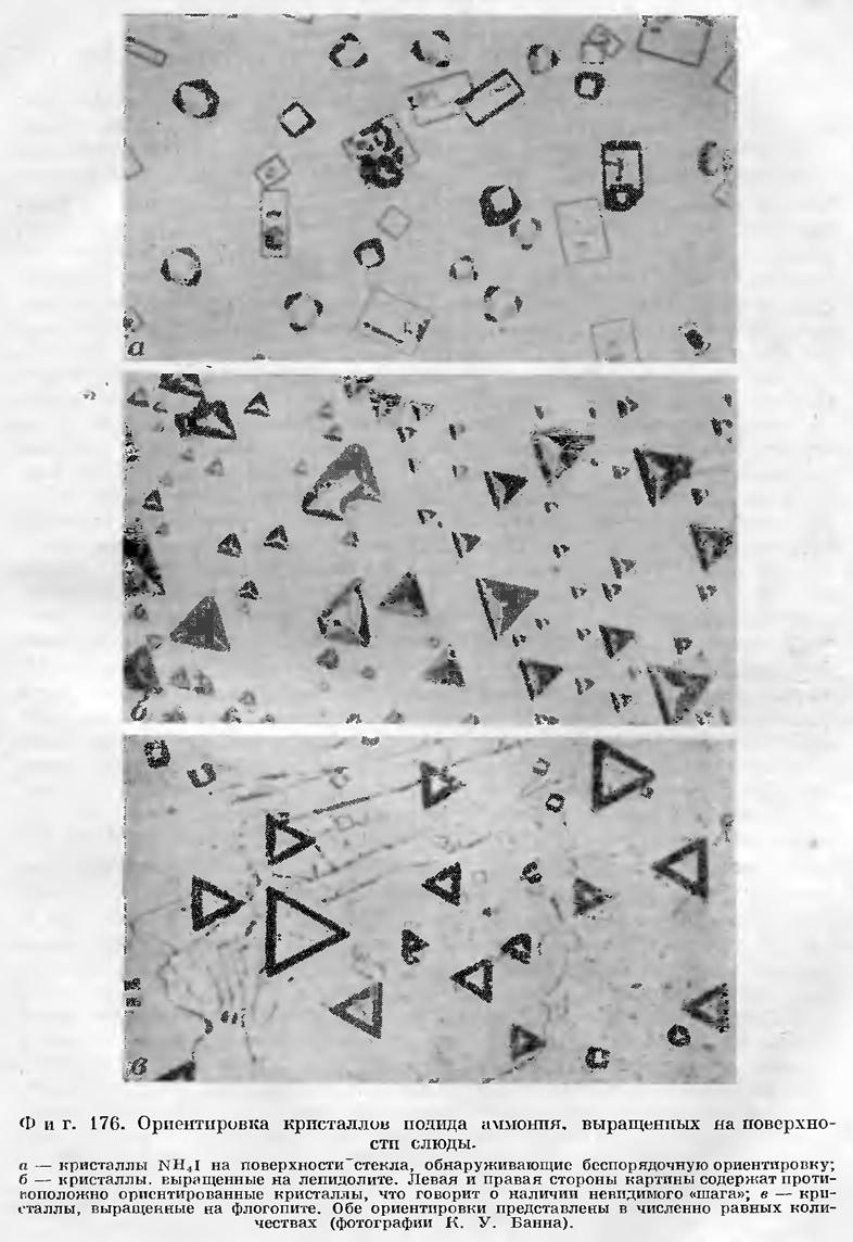 Фиг. 176. Ориентировка кристаллов иодида аммония, выращенных на поверхности слюды