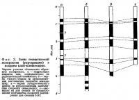 Фиг. 2. Зоны геомагнитной полярности в позднем плио-плейстоцене