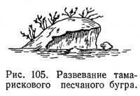 Рис. 105. Развевание тамарискового песчаного бугра