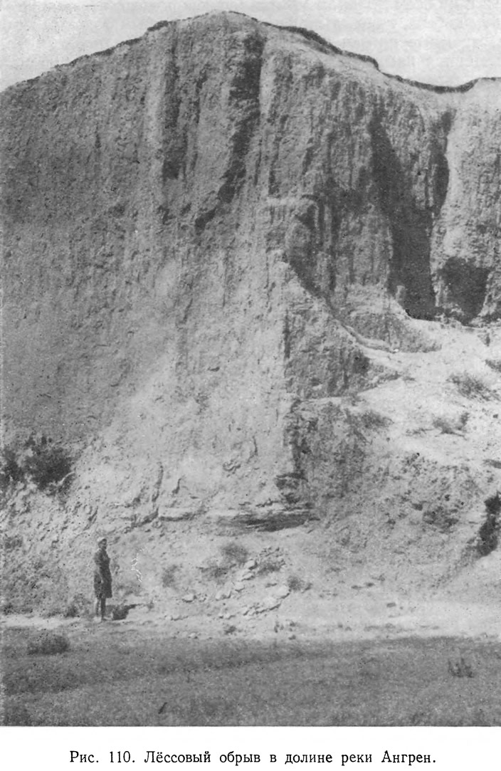 Рис. 110. Лёссовый обрыв в долине реки Ангрен