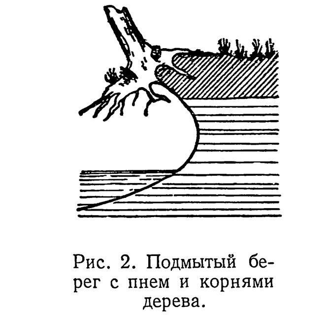 Рис. 2. Подмытый берег с пнем и корнями дерева