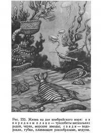 Рис. 235. Жизнь на дне кембрийского моря
