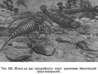 Рис. 236. Жизнь на дне силурийского моря: различные эйриптериды среди водорослей