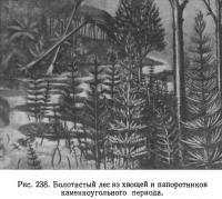 Рис. 238. Болотистый лес из хвощей и папоротников каменноугольного периода