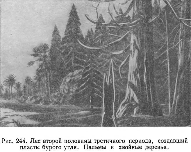 Рис. 244. Лес второй половины третичного периода, создавший пласты бурого угля