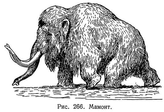 Рис. 266. Мамонт