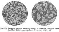 Рис. 271. Россыпное золото с приисков бассейна реки Бодайбо в Бодайбинском районе