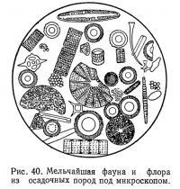 Рис. 40. Мельчайшая фауна и флора из осадочных пород под микроскопом