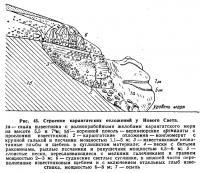 Рис. 45. Строение карангатских отложений у Нового Света
