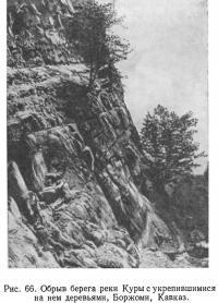 Рис. 66. Обрыв берега реки Куры с укрепившимися на нем деревьями