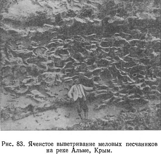 Рис. 83. Ячеистое выветривание меловых песчаников на реке Альме, Крым