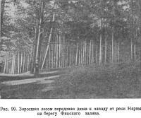Рис. 99. Заросшая лесом передовая дюна к западу от реки Нарвы